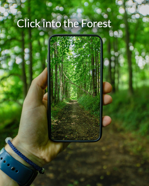 Click Into the Forest